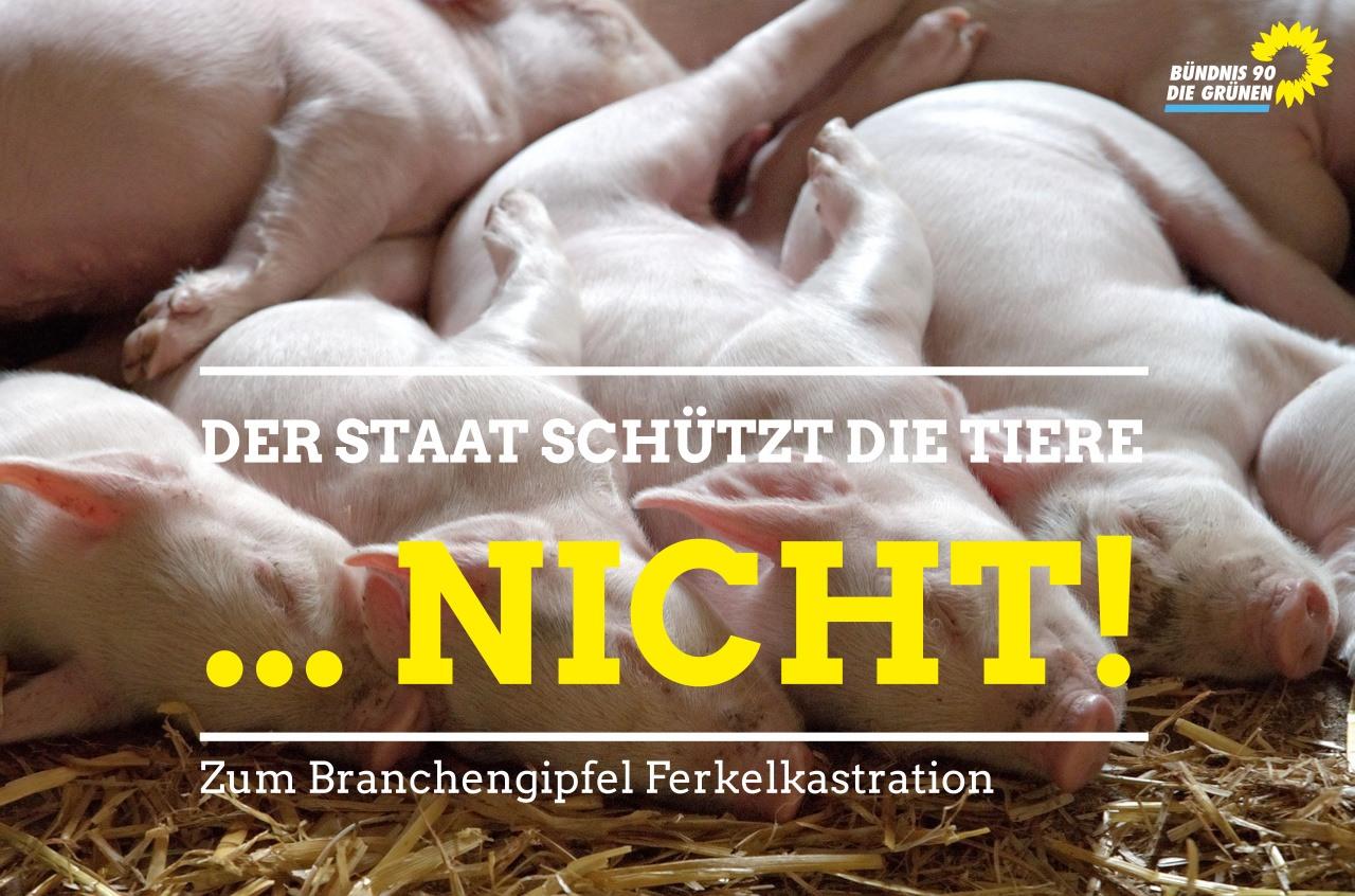 Der Staat schützt die Tiere … NICHT!